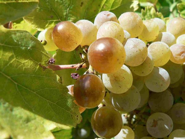 Turismo enologico-Ruta del Vino de Rueda1