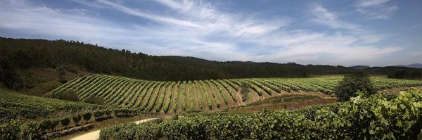 Turismo enologico-Ruta del Vino de Rueda3