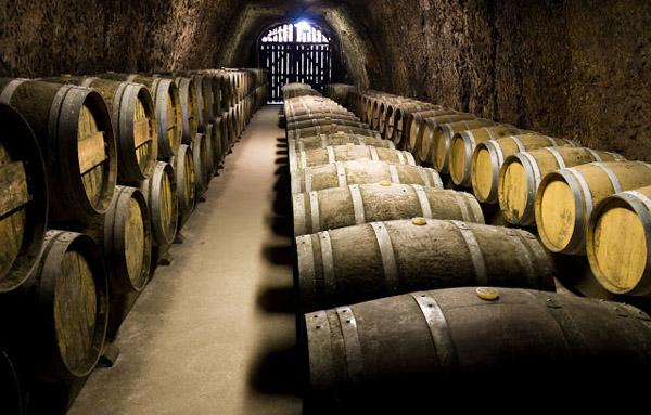 Turismo enologico-Ruta del Vino de Rueda5