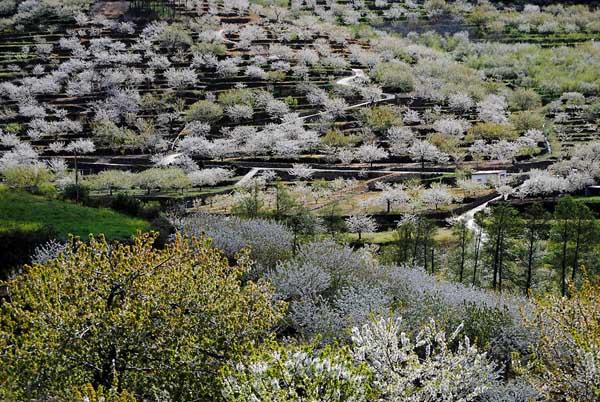 El valle del Jerte, bello en cualquier momento