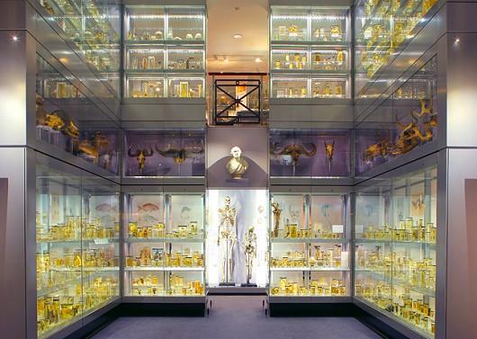Hunterian Museun