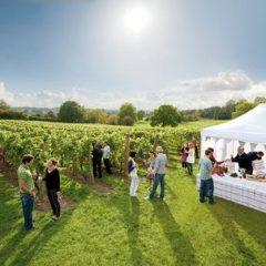 El esplendor de los vinos ingleses.