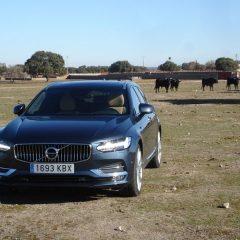 La Ruta del Toro y la Dehesa Salmantina con el Volvo V90