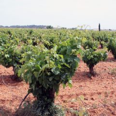 10 cosas que disfrutar en la ruta del vino cigales