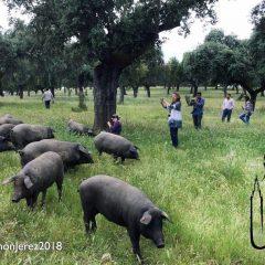Jerez de los Caballeros promociona el Salón del Jamón Ibérico